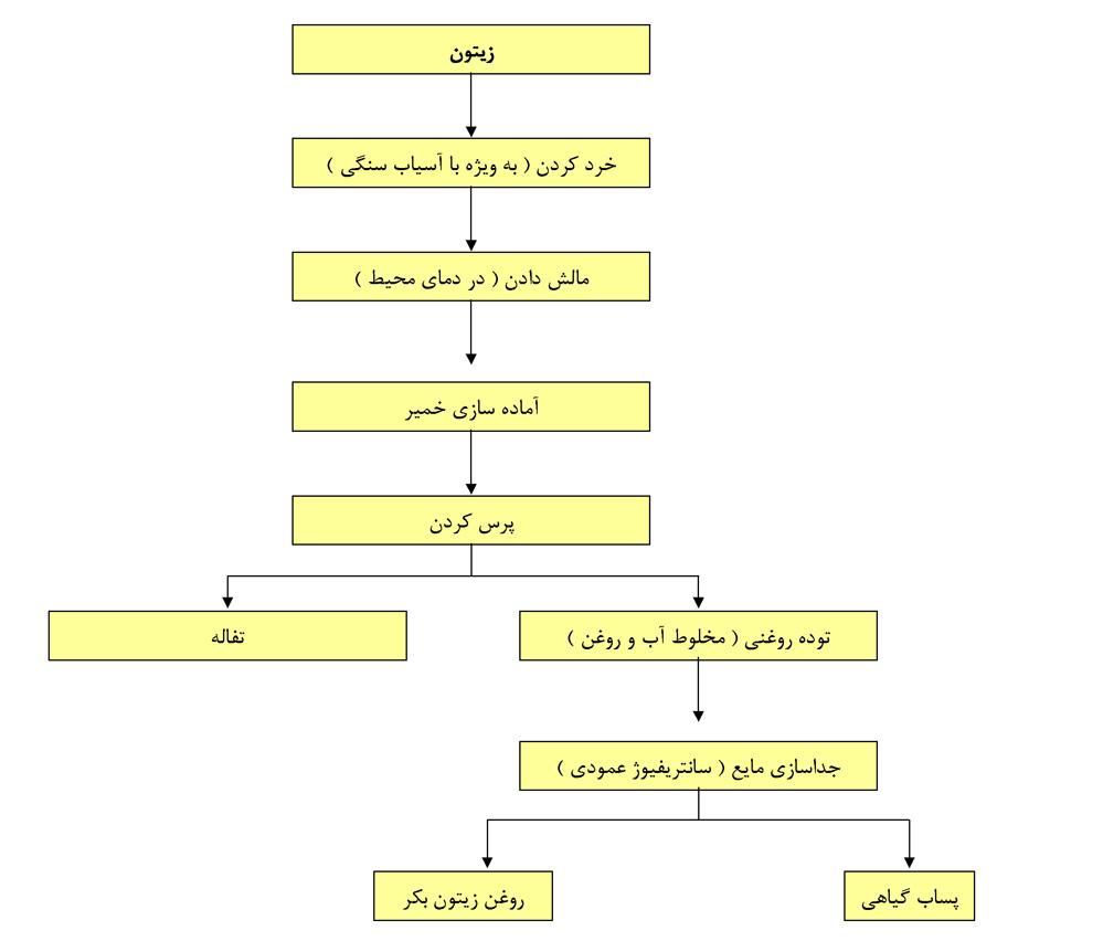 مراحل مختلف استخراج روغن زیتون با استفاده از سیستم پرس
