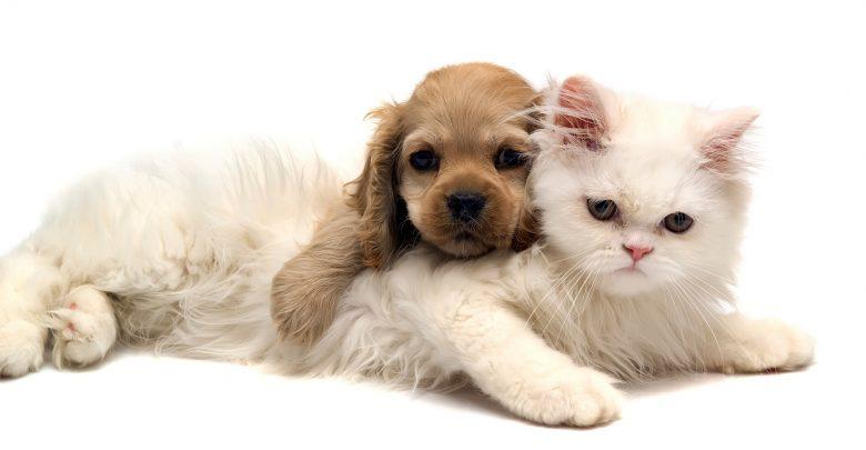 ایده راه اندازی پانسیون حیوانات خانگی