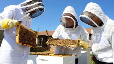 Photo of طرح زنبورداری و تولید عسل