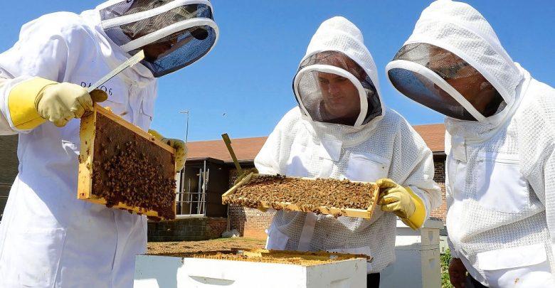 طرح زنبورداری و تولید عسل