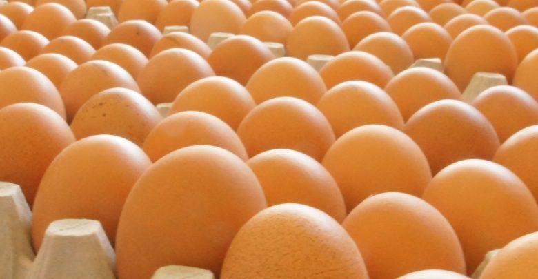 آشنايي با خط تولید پودر و مایع تخم مرغ