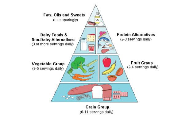 هرم غذایی انسان و جایگاه حبوبات و غلات