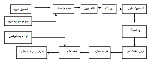 فرایند سورتینگ و بسته بندی میوه