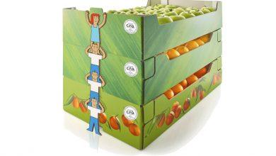 Photo of طرح احداث واحد بسته بندی میوه