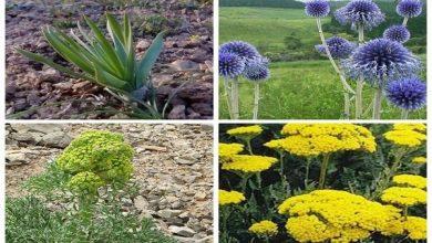 Photo of ایده سرمایه گذاری در تولید گیاهان دارویی