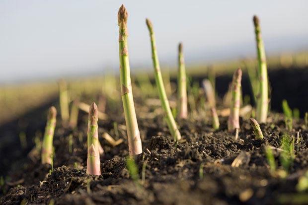 ایده سرمایه گذاری در تولید گیاهان دارویی