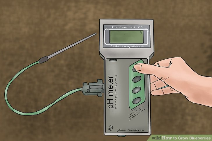 میزان pH خاک بلوبری