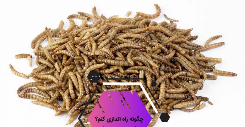 mealworm 780x405 - راهنمای کامل پرورش کرم میل ورم + بررسی سود