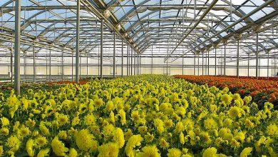 Photo of گزارش؛ گلخانه ای با ۳۰ میلیون درآمد در ماه