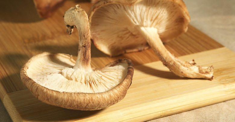 shitake7 780x405 - چگونه قارچ دارویی شیتاکه را پرورش دهیم؟