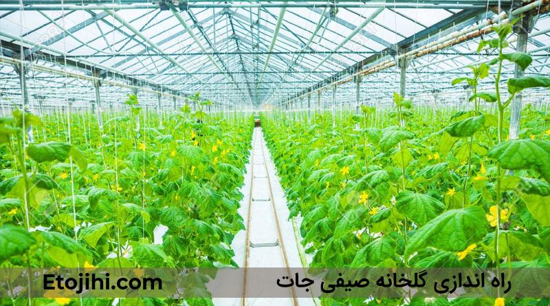 cucumber greenhouse - چگونه یک گلخانه صیفی جات راه اندازی کنیم؟