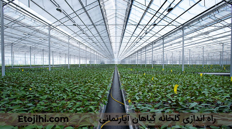 راه اندازی گلخانه گیاهان آپارتمانی