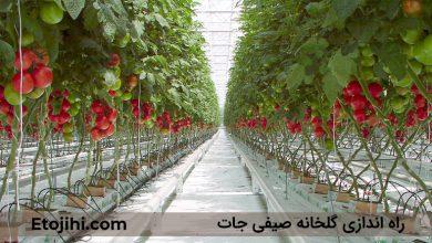 Photo of چگونه یک گلخانه صیفی جات راه اندازی کنیم؟