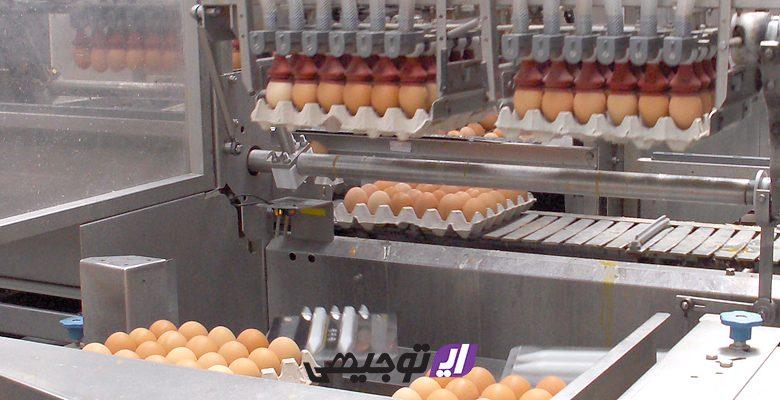 main egg 780x400 - ایده احداث کارگاه بسته بندی تخم مرغ + طرح توجیهی ۹۹